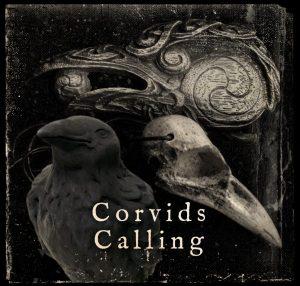 Corvids Calling
